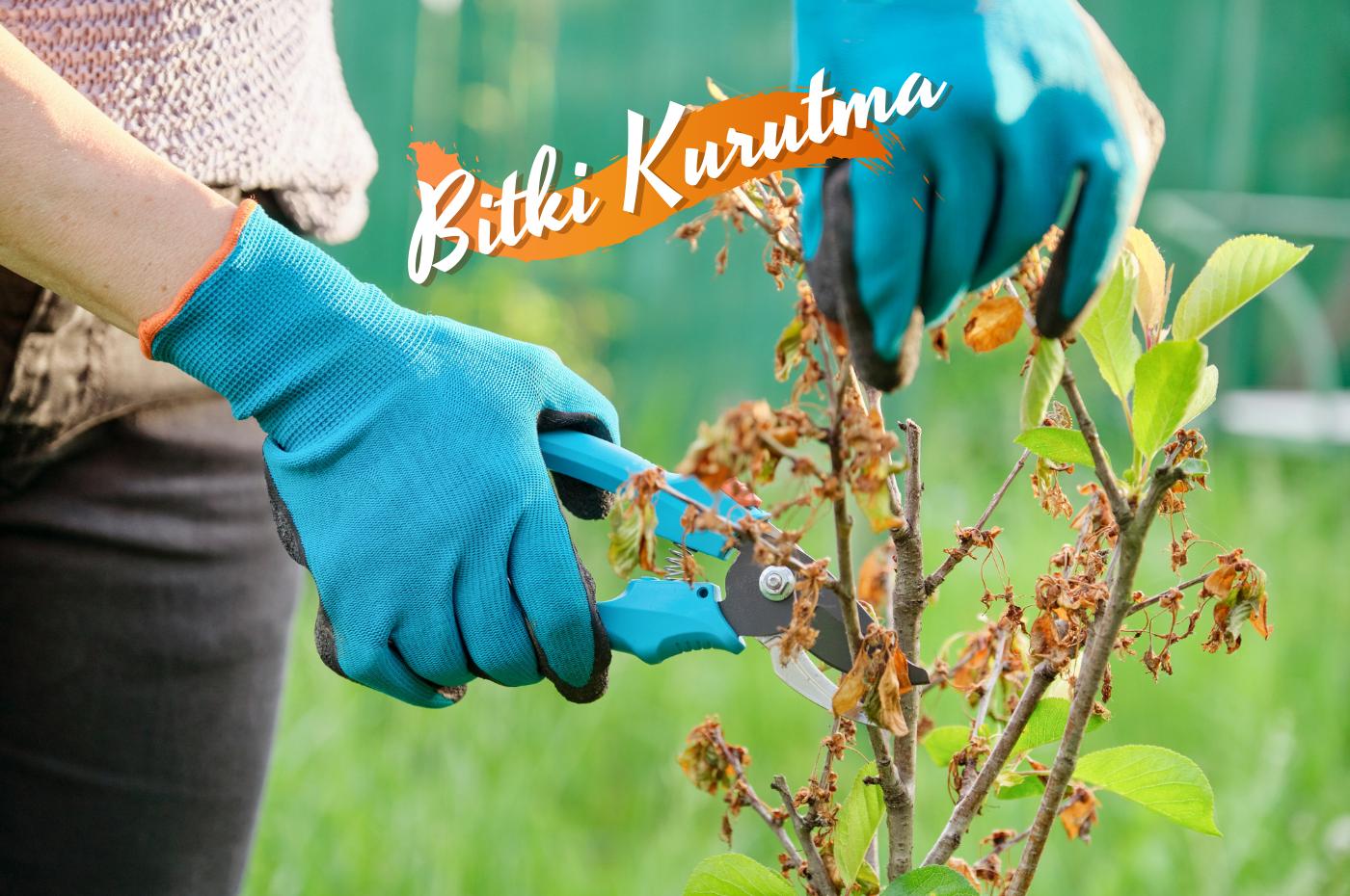 Bitkiler nasıl kurutulur? Herbaryum nasıl yapılır? Sağlık bitki kurutma